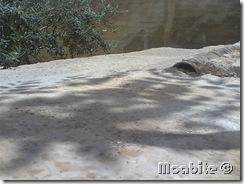 Summer Rain in Smakieh, Karka, Jordan (5)