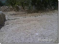 Summer Rain in Smakieh, Karka, Jordan